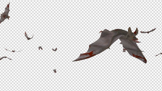 Thumbnail for Swarm of Bats - Flying Around - Bloody Version