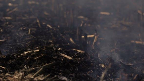 Nature Damage Ecological Environmental Destruction