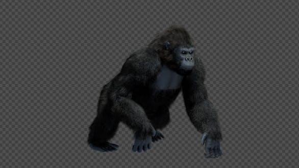 King Kong Walk And Howl
