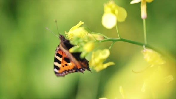 Cover Image for Butterfly  on a Flower in