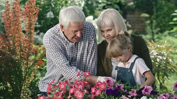 Thumbnail for Elderly Couple and Girl Looking at Blooming Flowers