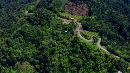 Aerial view following a dirtroad running through the Amazon rainforest