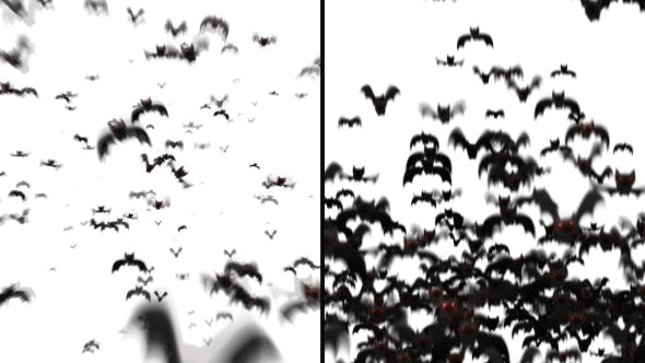 Thumbnail for Bats Transitions 2 Styles