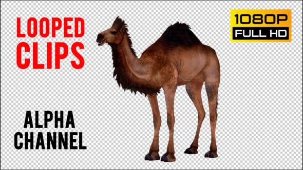 Thumbnail for Camel 4