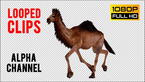 Thumbnail for Camel 9