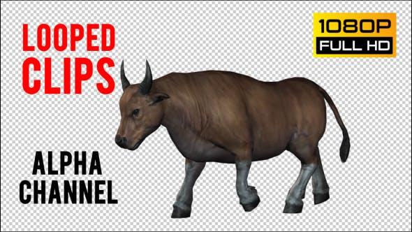 Thumbnail for Bull 6