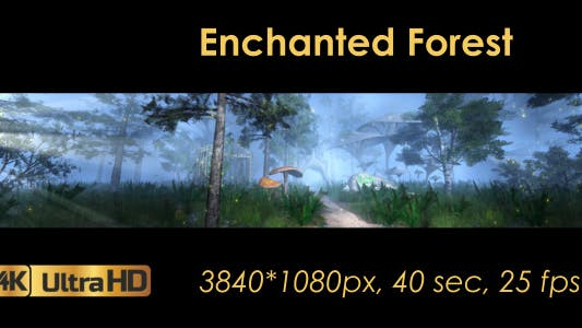 Thumbnail for The Enchanted Forest Panorama