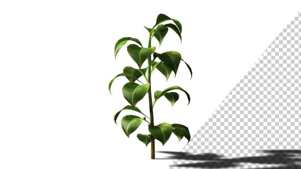Thumbnail for Growing Plants
