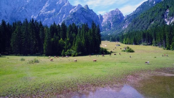Thumbnail for Horses Graze on Green field.Lake Lago Di Fusine Superiore Italy Alps. Aerial