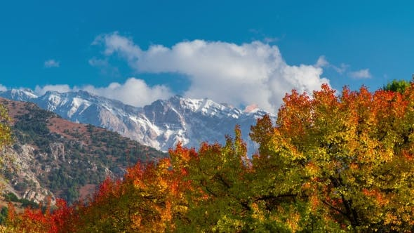 Cover Image for of the Autumn Forest and Colored Trees in the Mountain