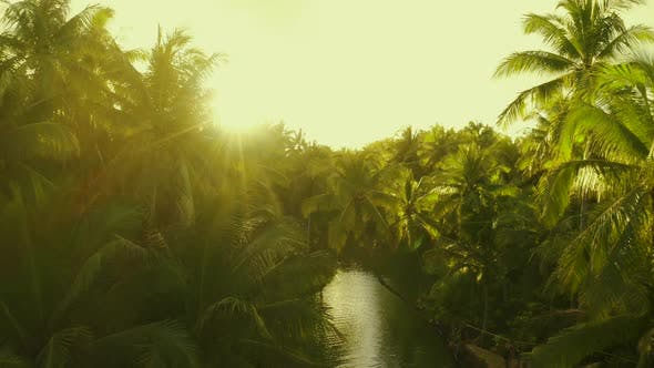 Thumbnail for Sunset Nature River Landscape and Palm Trees Aerial View. People Having Active Fun in River