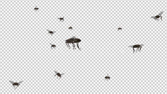 Thumbnail for Swarm Flies - 4K