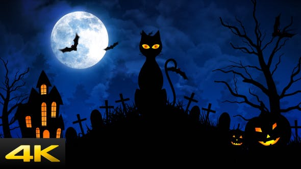 Cover Image for Halloween Scary Cat II