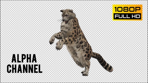 Thumbnail for Leopard