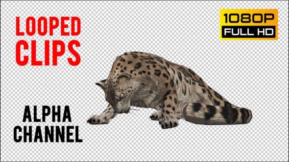 Thumbnail for Leopard 7