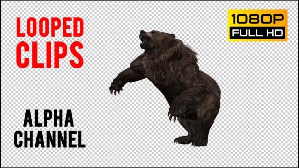 Thumbnail for Bear 10