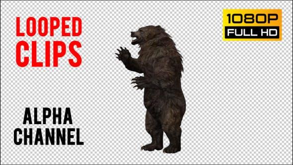 Thumbnail for Bear 13