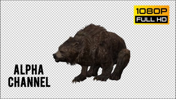 Thumbnail for Bear 15