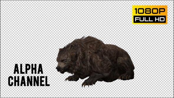 Thumbnail for Bear 20