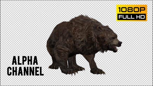 Thumbnail for Bear 28
