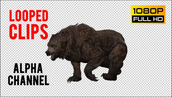 Thumbnail for Bear 30