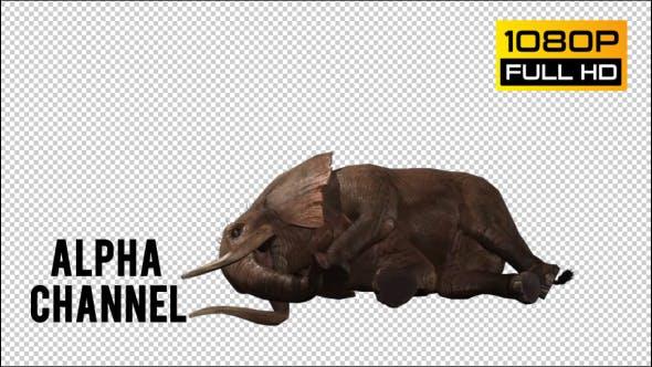 Thumbnail for Elephant 3