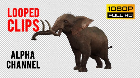 Thumbnail for Elephant 5
