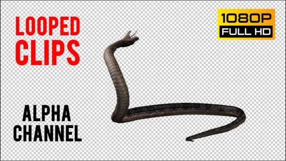 Thumbnail for Snake 3