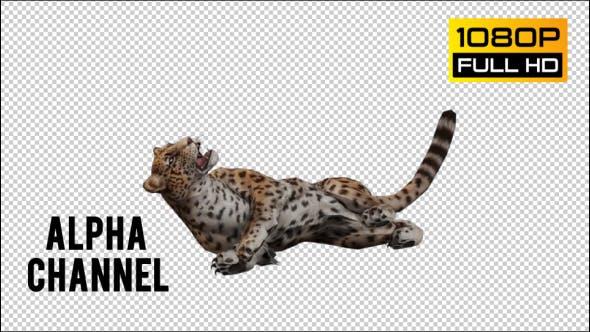 Thumbnail for Jaguar 3