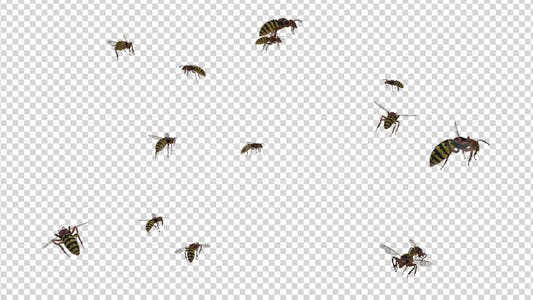 Thumbnail for Swarm Wasps - Flying Around - 4K