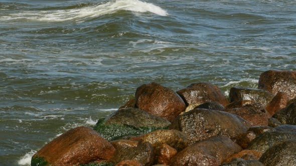 Thumbnail for Shore of Sea with Green Seaweed and Mossy on Stones in Water
