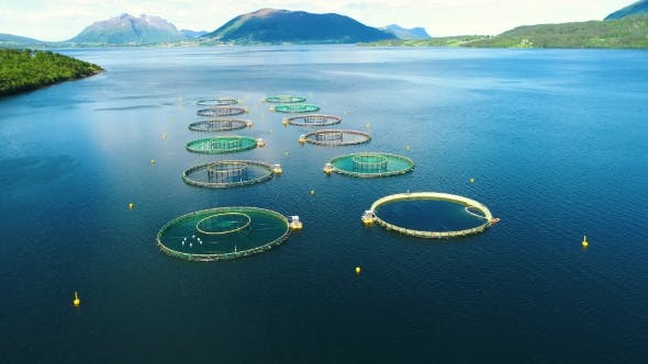 Cover Image for Aerial Footage Farm Salmon Fishing in Norway