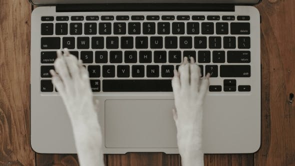 Thumbnail for Dog Paws Texting on Laptop Keyboard