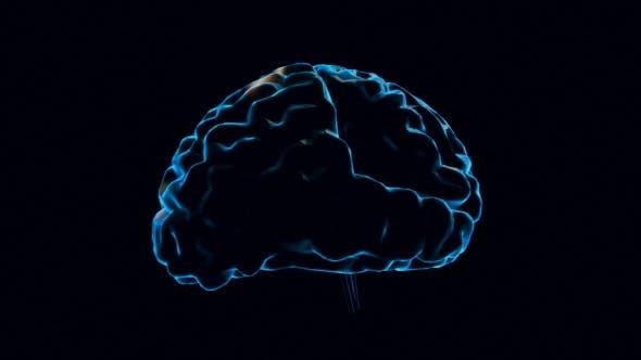Human Brain with Neuronal Impulses
