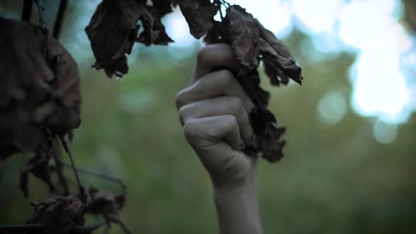 Thumbnail for Shot of Hand with Long Nails, a Woman Touches the Dry Leaves of a Tree in the Park, Mystical