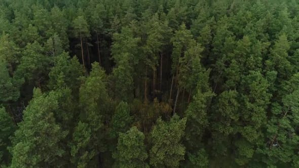 Thumbnail for Aerial Nature View of Green Wild Forest