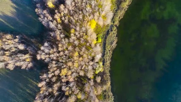 Thumbnail for Aerial View: Yellow Wild Forest and Water