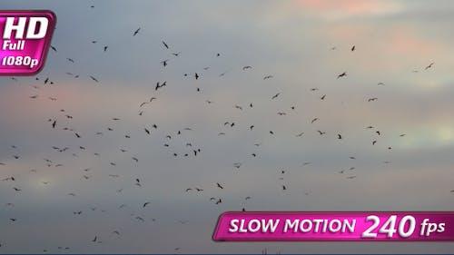 Vogelschwarm in der Ferne