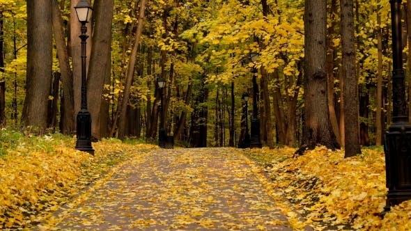 Thumbnail for Park Landscape at Autumn