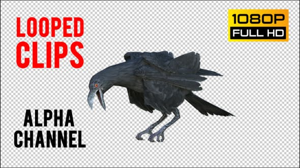 Thumbnail for Black Raven Realistic 6