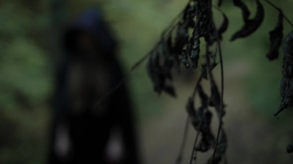 Thumbnail for Figure of Wicked Witch Is Wearing in Black Long Gown with Hood, Standing in Scary Dark Forest