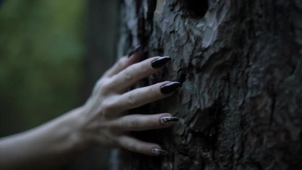Thumbnail for Pale Witch Hand with Sharp Black Nails Is Touching a Trunk of Old Tree in a Dark Forest