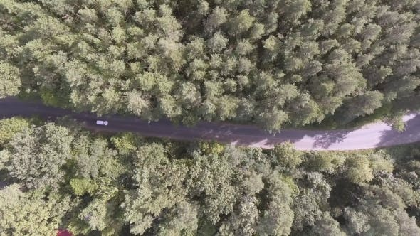 Thumbnail for AERIAL: Car Driving Through Pine Forest.