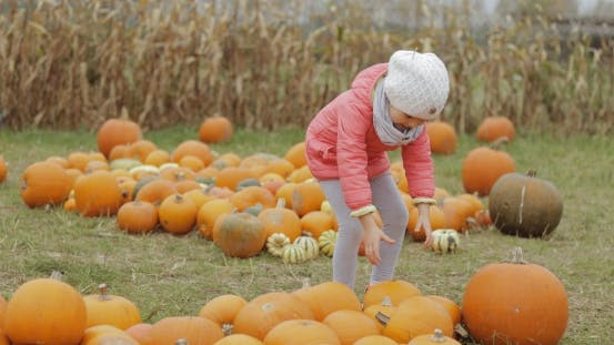 Child Collecting Pumpkins in Yard