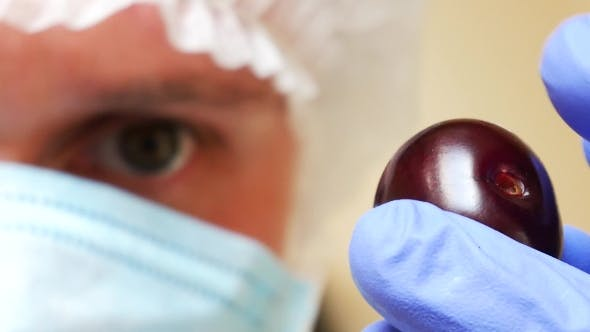 Thumbnail for Laboratory Assistant Checks the Quality of Fresh Red Cherries