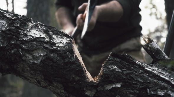 Thumbnail for The Logger Walks with an Ax in the Woods and Chooses Trees
