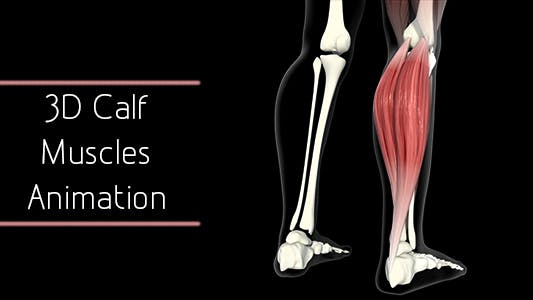 Thumbnail for 3D Calf Muscles Animation
