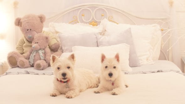 Thumbnail for Two Adorable Dogs Ready To Celebrate Christmas.