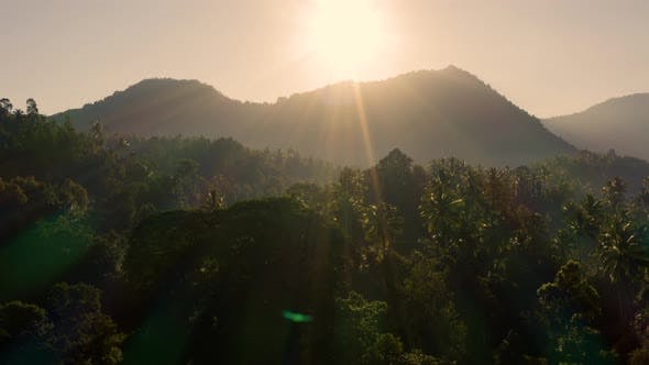 Cover Image for Moving Over Rainforest with a Mountain in the Background
