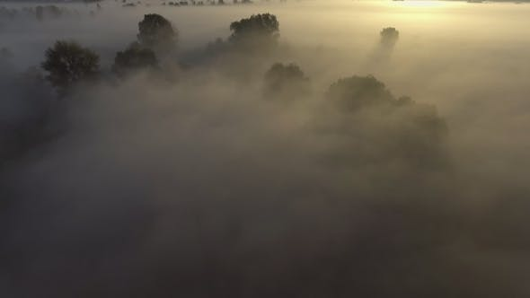 Thumbnail for Aerial View of Morning Fog over the River in Forest Valley at Sunrise